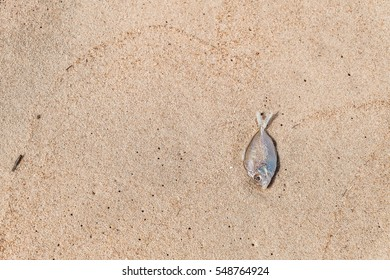 Dead tiny fish on sand beach