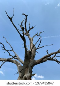 Dead tree against a blue sky