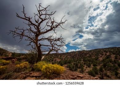 Dead tree against cloudy sky in desert landscape