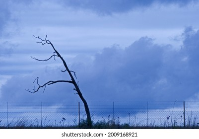 DEAD TREE AGAINST OVERCAST SKY WITH FENSE