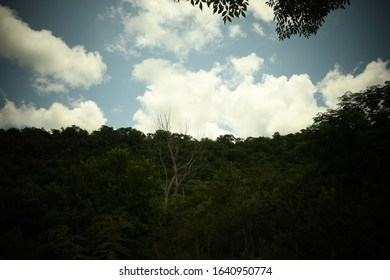 Dead tree amidst luscious green vegetation against a blue, cloudy sky