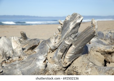 Dead tree at the beach in California