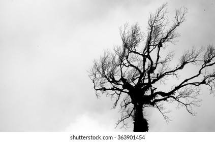A dead tree in black and white tone