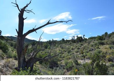 A dead tree in a bleak dry desert