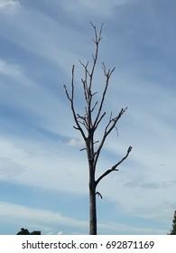 dead tree in blue sky