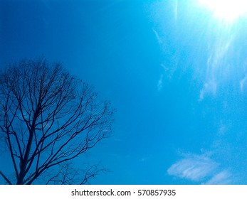 dead tree with the blue sky background