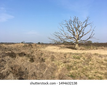 Dead tree with a blue sky on moorland in Kampina nature reserve, the Netherlands