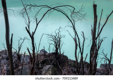 Dead tree bodies in the Kawah Putih - ancient volcanic crater with acid water, Indonesia