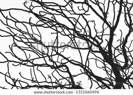 Dead Tree Branch Isolated On White Stock Photo Edit Now 1351060496