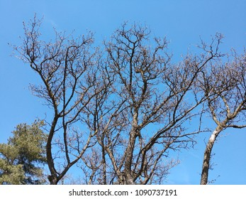 Dead Tree Branches Against a Bright Blue Sky