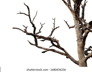 Dead tree branches with clipping path isolated on white background.