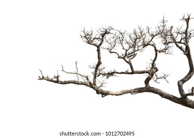 Dead tree branches isolated on white background.