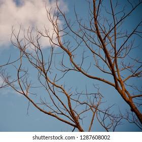 Dead tree branches in the winter season unique natural photo