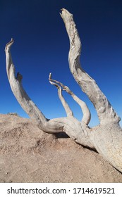 Dead Tree at Bryce Point, Bryce Canyon National Park, Utah, United States.