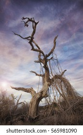 Dead Tree & Colorful Sky with lens flare