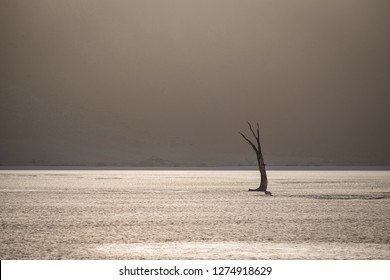 Dead Tree in Deadvlei Namibia at sunrise