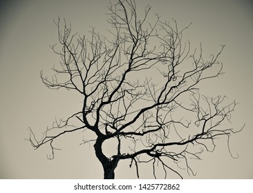 A dead tree with dried branches isolated black and white photo