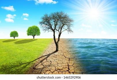 Toter Baum auf trockenem Land mit gebrochenem Boden und Wiese mit Meer. Konzept des Klimawandels oder der Erderwärmung.