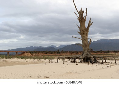 A dead tree in a dry dam in South Africa