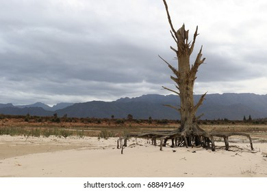 A dead tree in a dry dam in the Western Cape in South Africa