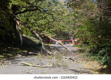 A dead tree falls, shattering onto a narrow road completely blocking it with broken branches and scattered debris