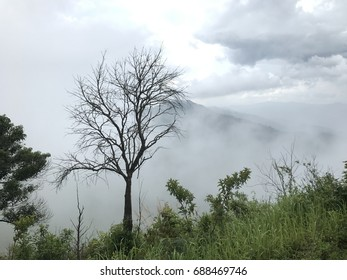 The dead tree and the foggy cloud.