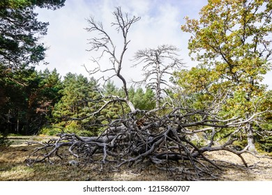dead tree in the forest