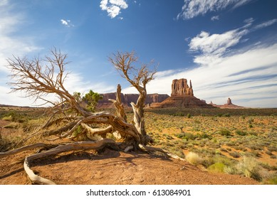 Dead Tree in front of a Butte in Monument Valley