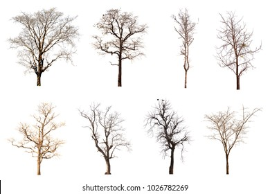 Dead tree group isolated on white background.