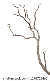 Dead tree isolated on white background, Dead branches of a tree.Dry tree branch.Part of single old and dead tree on white background.
