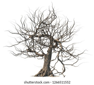 Dead tree isolated on white background.