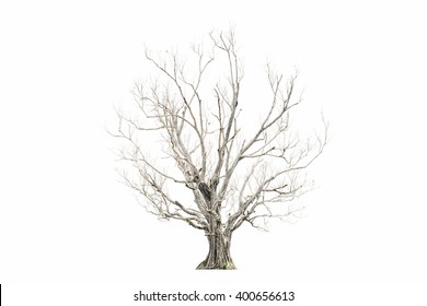 Dead tree isolated on white background  Dead tree isolated on white background