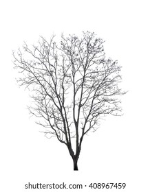 Dead tree isolated on white background