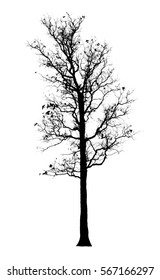 dead tree, isolated on white background