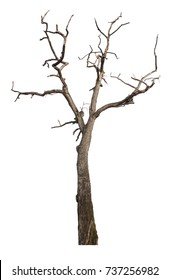 Dead tree  isolated on white background,Clipping path