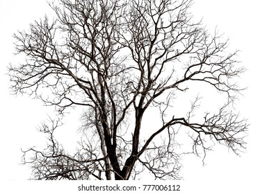 Dead tree isolated on white background and clipping path