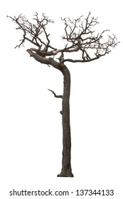 Dead tree isolated with white background