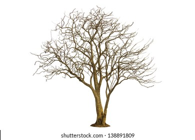 Dead tree isolated and white background