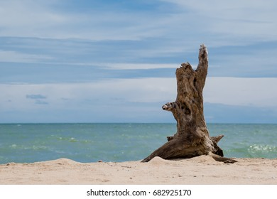 The dead tree lies on a sandy beach on a background of sea and bright blue sky.