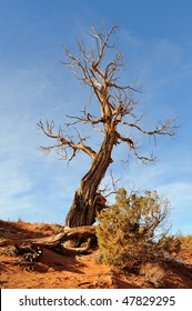 Dead tree at Monument Valley