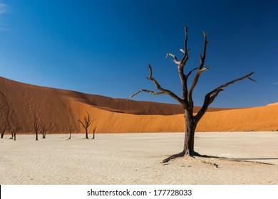 Dead tree in Namibian desert