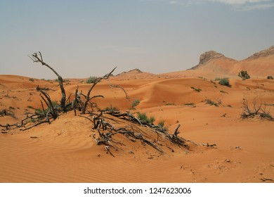 dead tree in Oman desert with red sand dunes