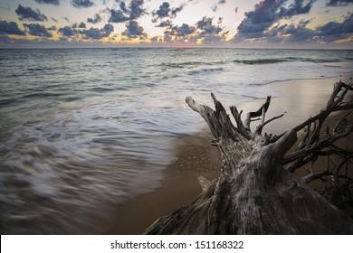 Dead tree on the beach. Long exposure