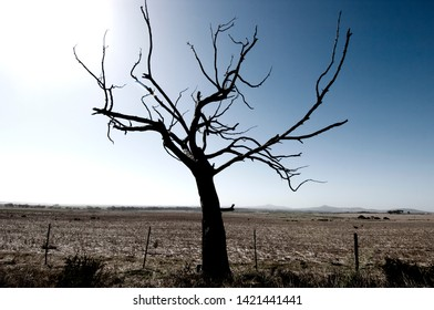 Dead Tree On Dry Landscape
