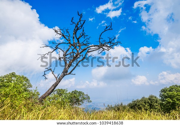 Dead tree on the mountain Among the meadows and clouds of the sky