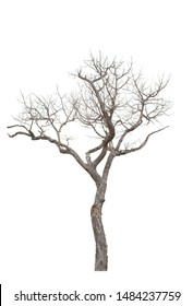 Dead tree on the white background