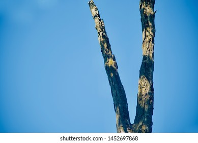 A dead tree parts with blue sky background photo