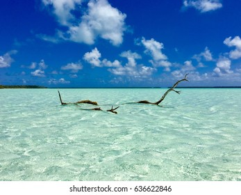 Dead tree reaching out of the beautiful turquoise lagoon at Marlon Brando's atoll Tetiaroa, Tahiti, French Polynesia