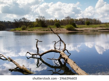 Dead tree in river with blue sky and clouds reflected in the water.