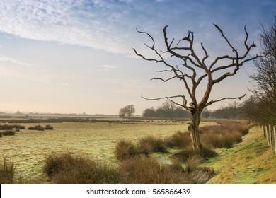 Dead tree at Romney Marsh in Kent